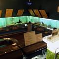 Photos: 富士湧水の里水族館 企画展コーナー