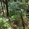 Photos: 鹿死木の棚へ続く林