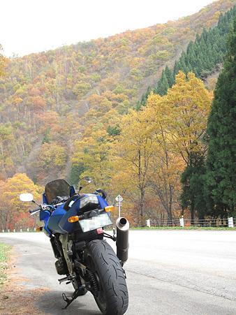 紅葉の山を背景に