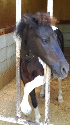 写真: P_20150726_104422 子馬?
