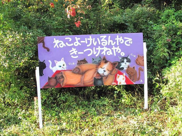 写真: IMG_9695 ぬこ寺