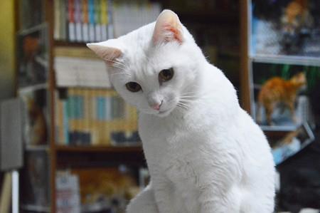 2015年07月18日のシロちゃん(雌2歳)