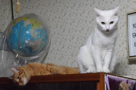 2015年08月08日のシロちゃん(メス2歳)