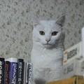 写真: 2015年08月28日のシロちゃん(メス2歳半)
