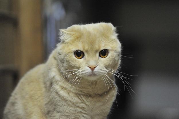 Photos: 2015年09月13日のスコちゃん(雄2歳半)