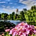 初夏から夏へ.....北海道は紫陽花の季節