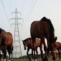 写真: 迫り来る馬、馬、馬....鉄塔の有る牧場