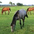 Photos: そしていつもの平和な牧場へ