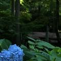 円山八十八ヶ所に咲く