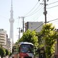 東京スカイツリーを背景に…