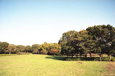 201111-05-001PZ