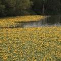 Photos: 花咲く湖