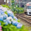 虹色あじさい電車2