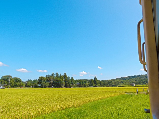 Photos: 青い空と稲穂