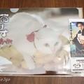 Photos: 猫侍2