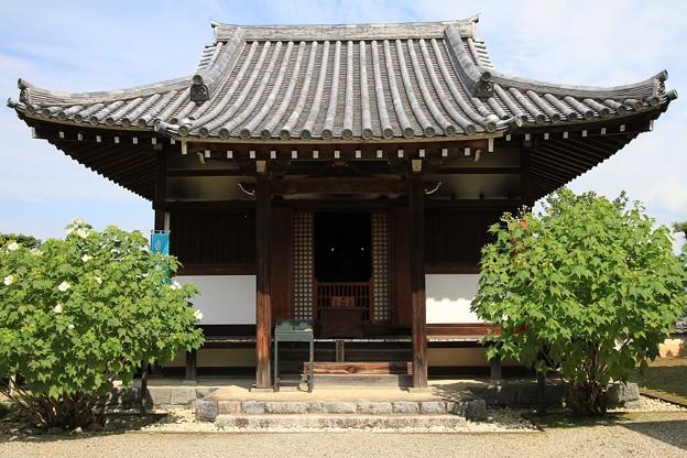 IMG_2618橘寺(仏頭山上宮皇院菩提寺)・観音堂
