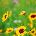 Photos: 可憐な花