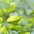 写真: 新緑の頃・・・。