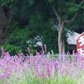 2015富士山麓・夏07「八木崎公園/ハーブフェスティバル」