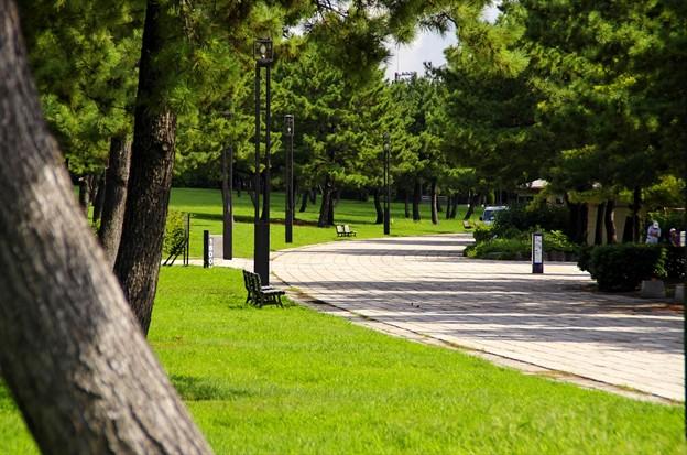 2015晩夏10八景島・海の公園「遊歩道」
