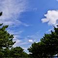 Photos: 2015晩夏11八景島・海の公園「遊歩道」