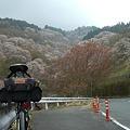 20110416吉野山花見ライド