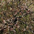写真: 2011年2月28日 洞慶院 梅園(5)