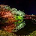 2012年4月8日 船越堤公園 夜桜 パノラマ写真(2)