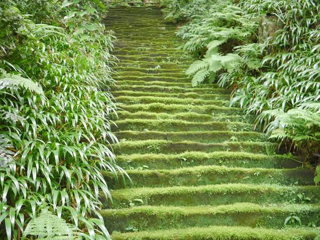 鎌倉妙法寺 苔の階段