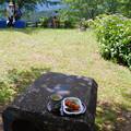 Photos: あじさい祭り2015.06-41