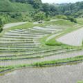 下赤坂の棚田4