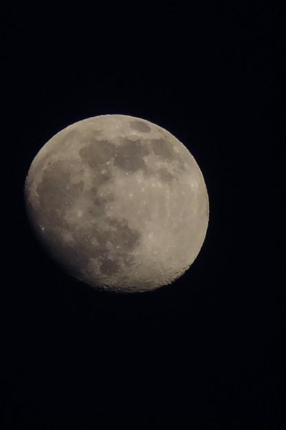 世界中に月の光が届くといいな