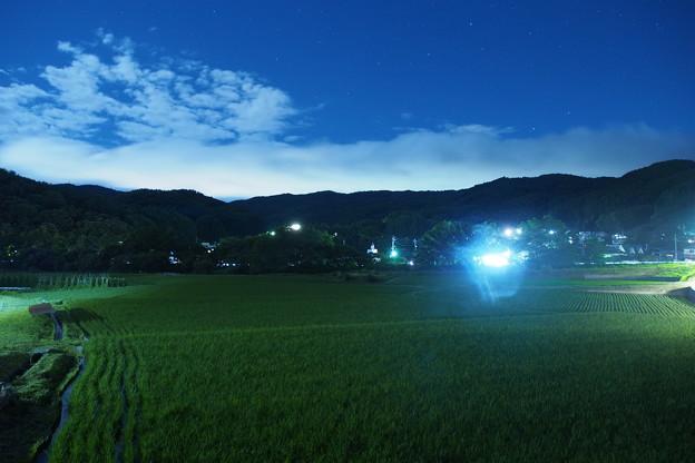 Photos: 稲作農業