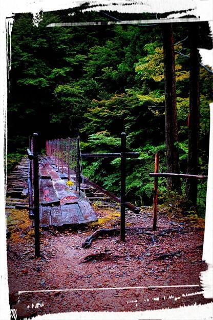 Photos: 憧れの森林鉄道