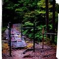 憧れの森林鉄道
