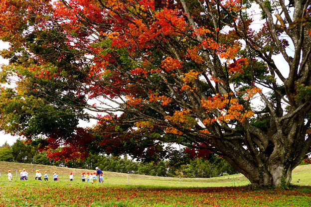 Photos: 大きな樹の下で