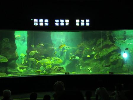 上越市立水族博物館 トロピカランド