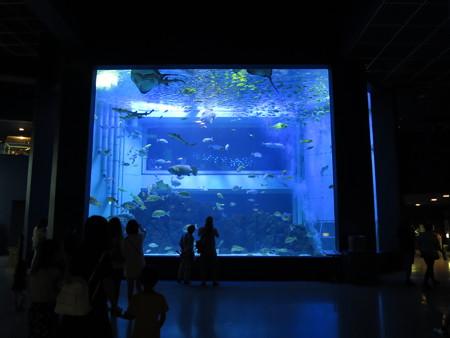 上越市立水族博物館 大回遊水槽 マリンジャンボ
