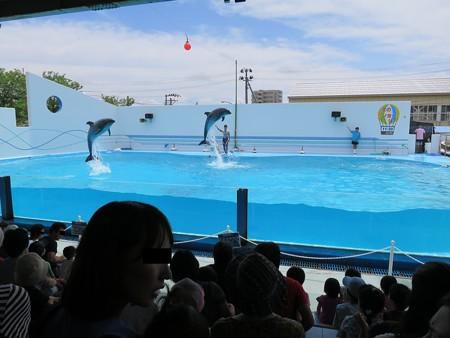 上越市立水族博物館 マリンスタジアム