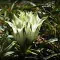 白い花・その1
