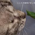 一部幼虫猫(ナミアゲハ飼育)