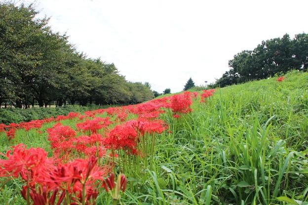 Photos: 赤と緑に覆われて