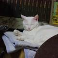 2015年08月16日のシロちゃん(メス2歳)
