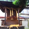Photos: 神社猫