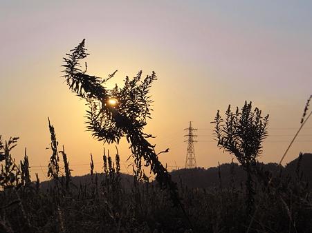 田圃道の夕景
