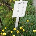 Photos: 犬糞 ~東近江市3