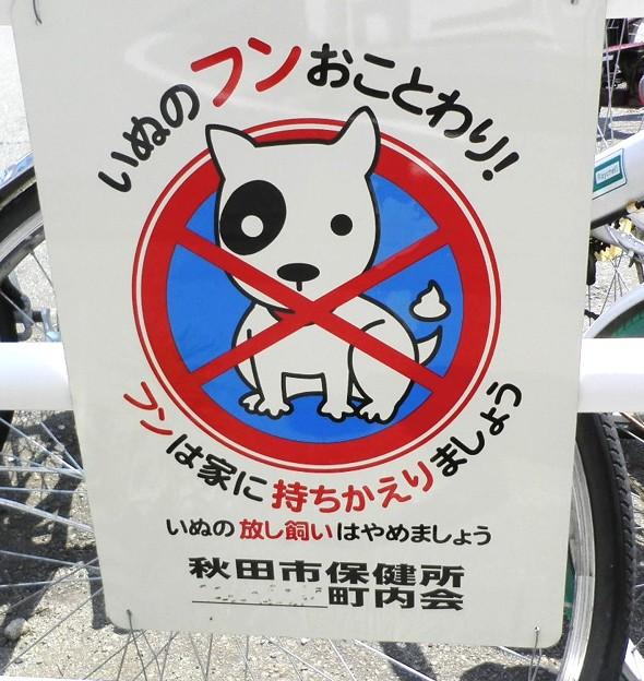 犬糞~秋田市