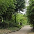 緑が冴える竹林園・・ここから午後
