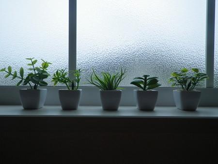 デスクトップガーデン【観葉植物】窓辺