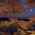 松島の紅葉月